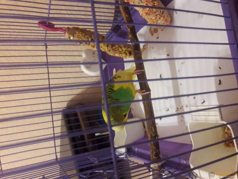 Опухоль на животе и шее у волнистого попугая - 2.jpg