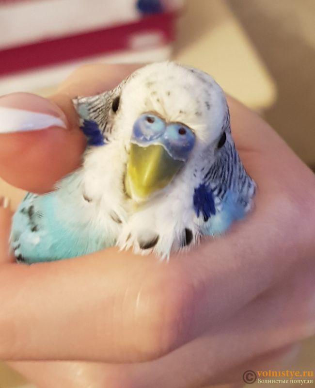 Проблема с глазом у волнистого попугая - 20181017_174656.jpg