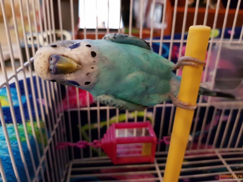 Проблема с глазом у волнистого попугая - 20181022_152449.jpg
