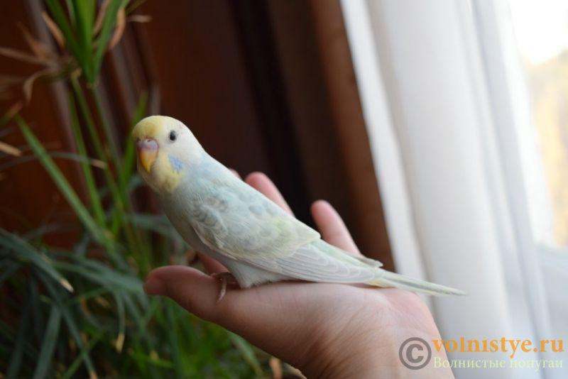 Радужная красота - птенцы от Тора и Мелисы - DSC_6706.JPG