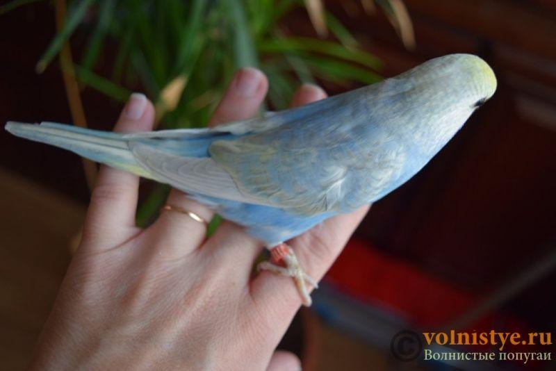 Радужная красота - птенцы от Тора и Мелисы - DSC_6733.JPG