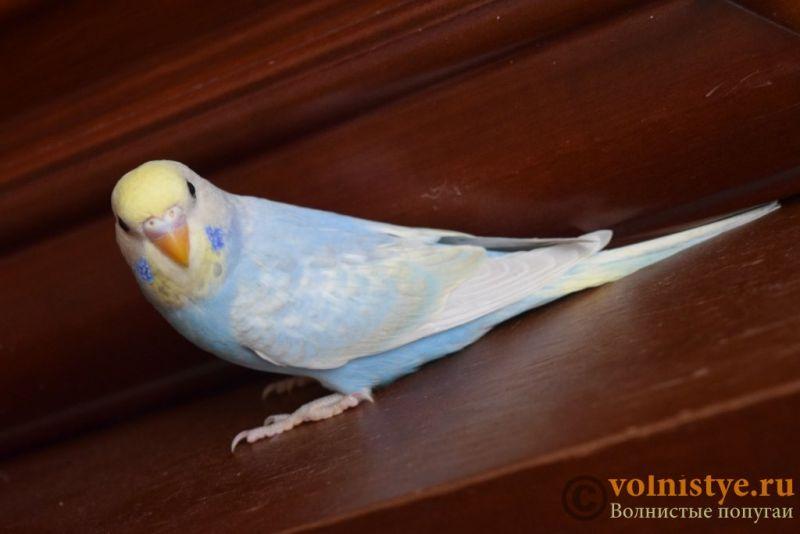 Радужная красота - птенцы от Тора и Мелисы - DSC_6761.JPG