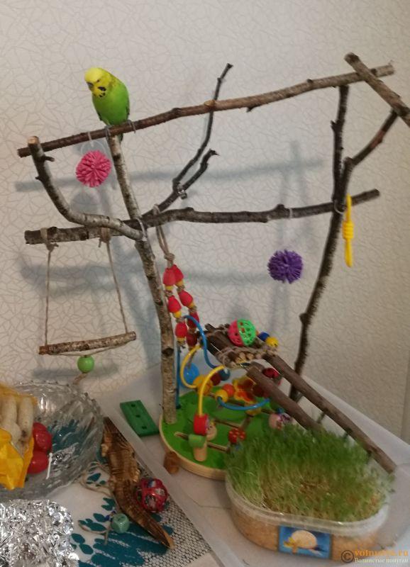 Игровая площадка для волнистого попугая своими руками - IMG_20181106_124409.jpg