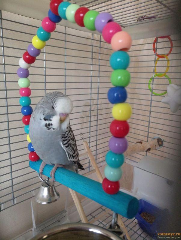 Определение пола и возраста попугаев № 11 - P81201-094654.jpg