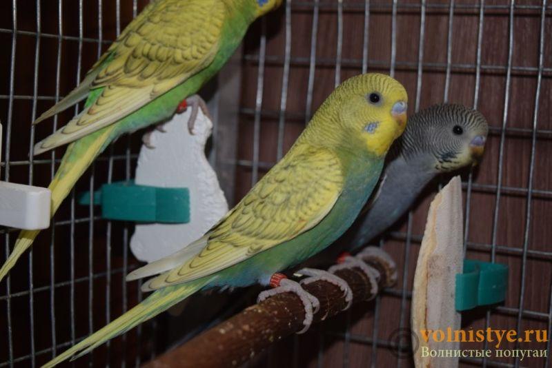 Радужная красота - птенцы от Тора и Мелисы - DSC_6892.JPG
