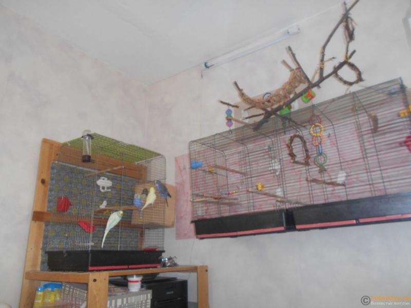 Мои птички - 029.JPG