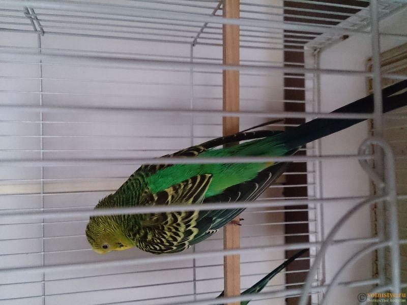 Заболел попугайчик - DSC_0029.JPG