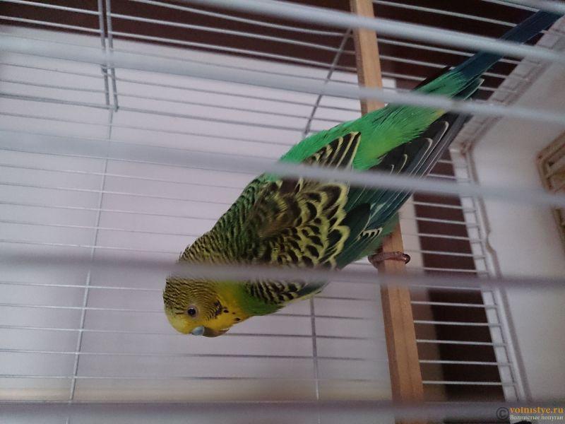 Заболел попугайчик - DSC_0030.JPG