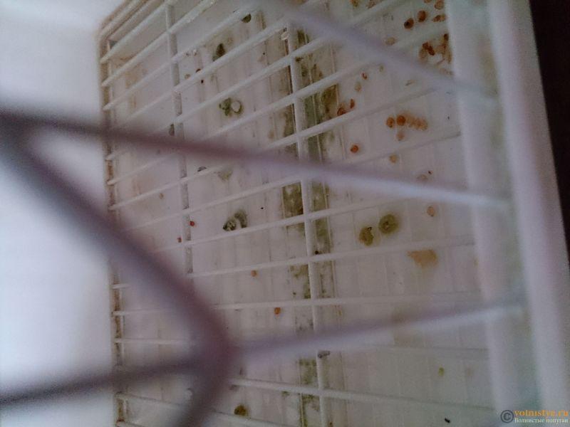 Заболел попугайчик - DSC_0032.JPG