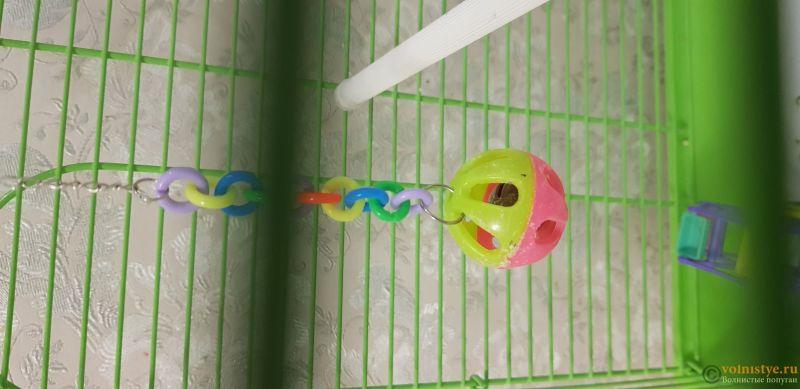 Создание пары волнистых попугаев - №2 - 15472079509071219406970210170582.jpg