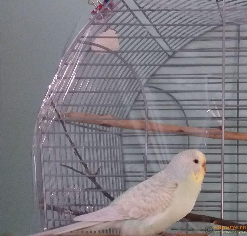 Фотографии  для статьи  окрасы волнистых попугаев - 20190116_204843.jpg