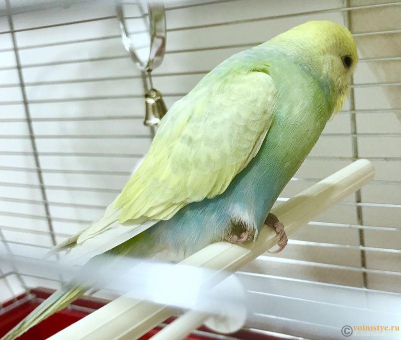 Фотографии  для статьи  окрасы волнистых попугаев - E8D17BBA-B9B1-4C69-A0DC-BB39896C60E7.jpeg