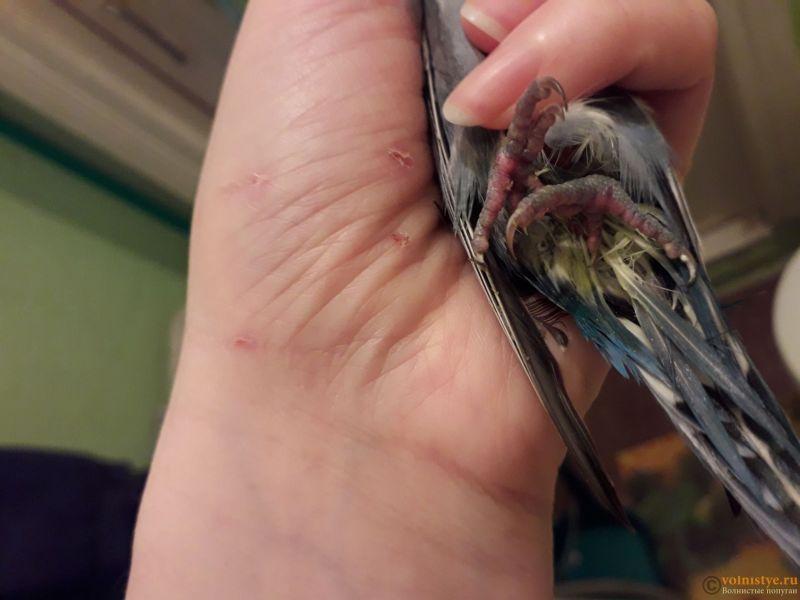 Попугай заболел. - 20190217_115034.jpg