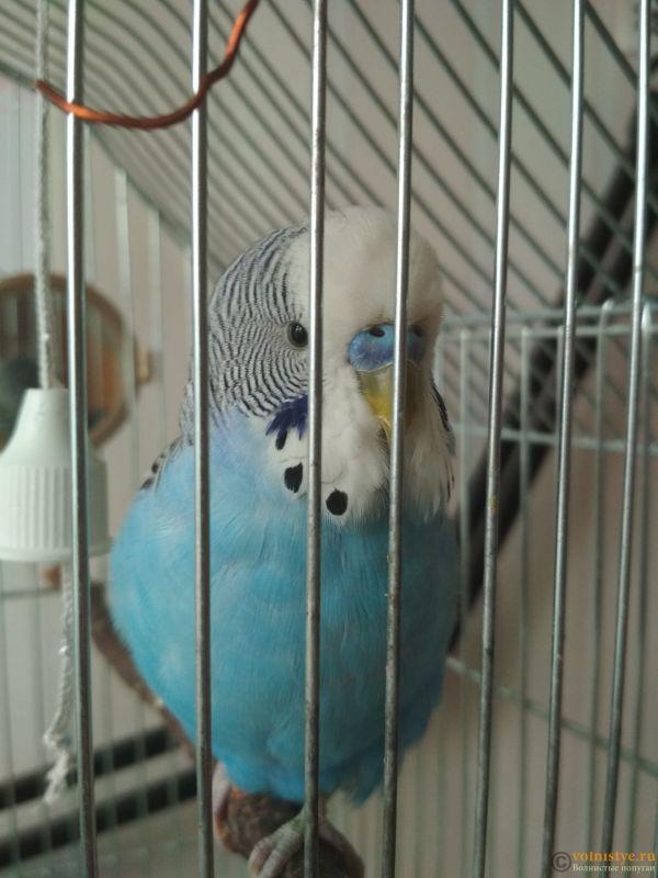 Помет - показатель здоровья птицы - Search_1552553084241231018515.jpg