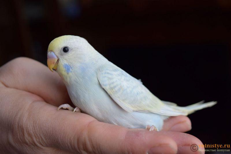 Радужная красота - птенцы от Тора и Мелисы - первый.JPG