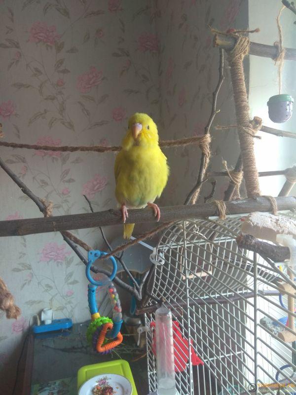 Какого окраса ваши попугаи и какого у них получились птенцы? - IMG_20190407_111955.jpg