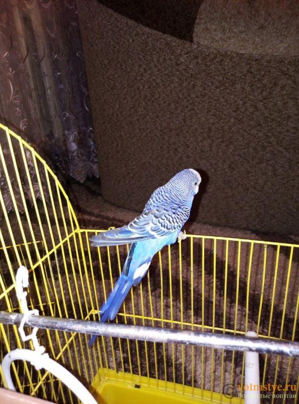 Нарост у попугая на клюве. - C7a1KmPa06c.jpg