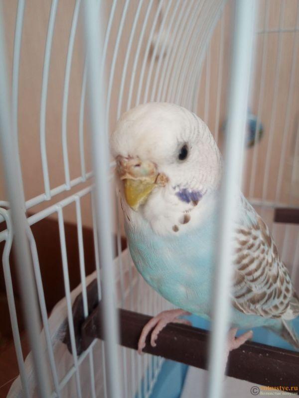 У попугая что-то возле клюва, и часто чешется - IMG_20190418_170341_2.jpg