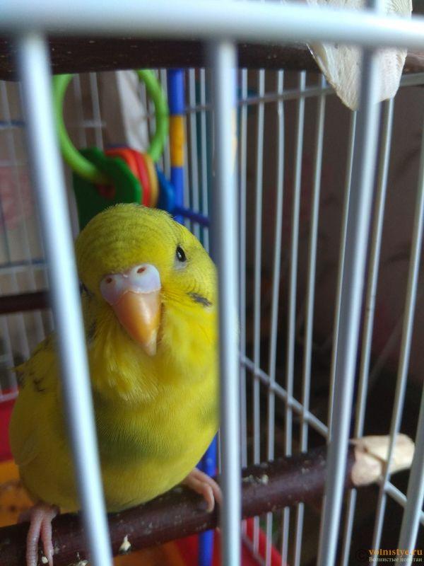 Какого окраса ваши попугаи и какого у них получились птенцы? - IMG_20190505_142002.jpg