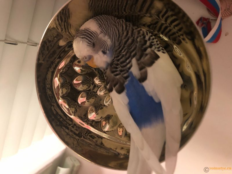 Попугай сидит на одной лапке, качается , жидкий у стул - 1B3C3D1E-0B11-4202-B1B6-CED00A01FA58.jpeg