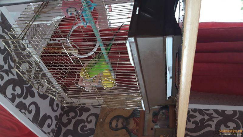 Помогите определить, болен ли попугай, и чем - 20190521_160548.jpg