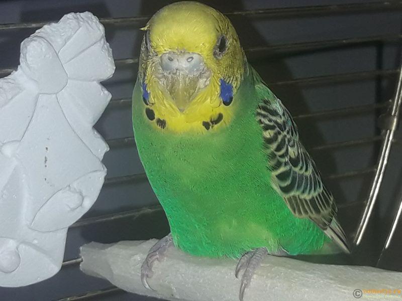 Попугай заболел - мне кажется, он умирает - 20190601_130126.jpg