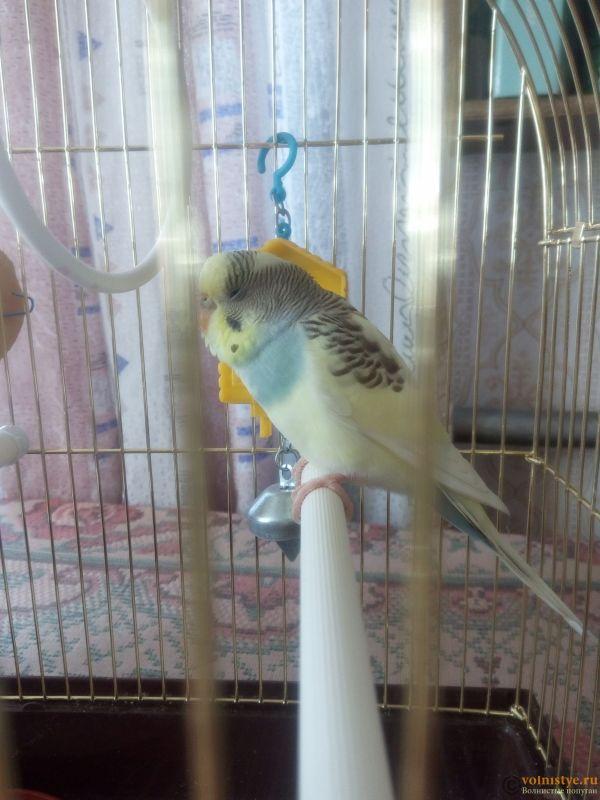 Заболел попугай - IMG_20190606_134541.jpg