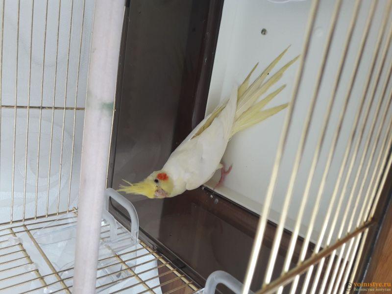 Заболел попугай - 1559823071888874405219.jpg
