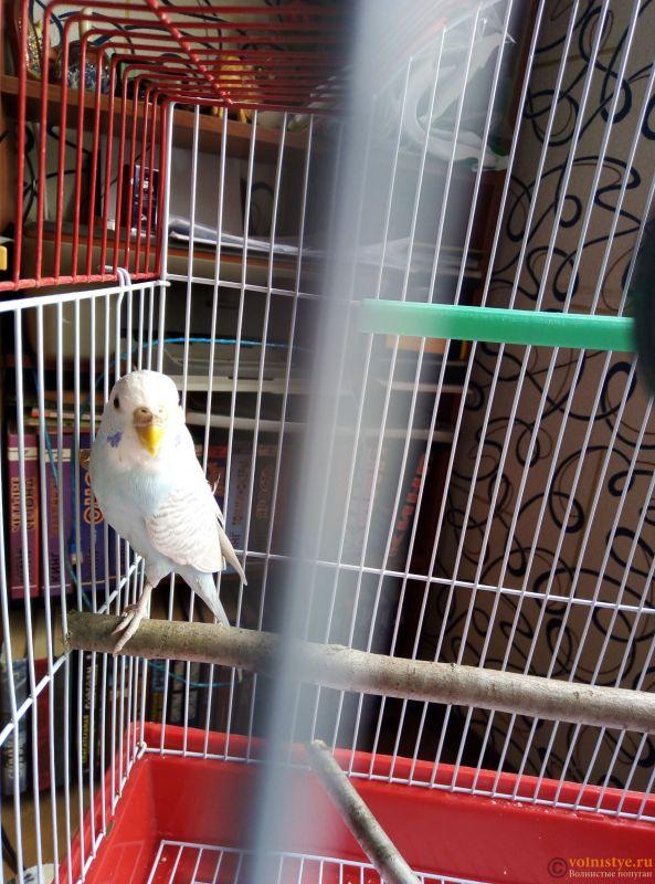 Очень пугливый попугай - IMG_20190408_133459.jpg