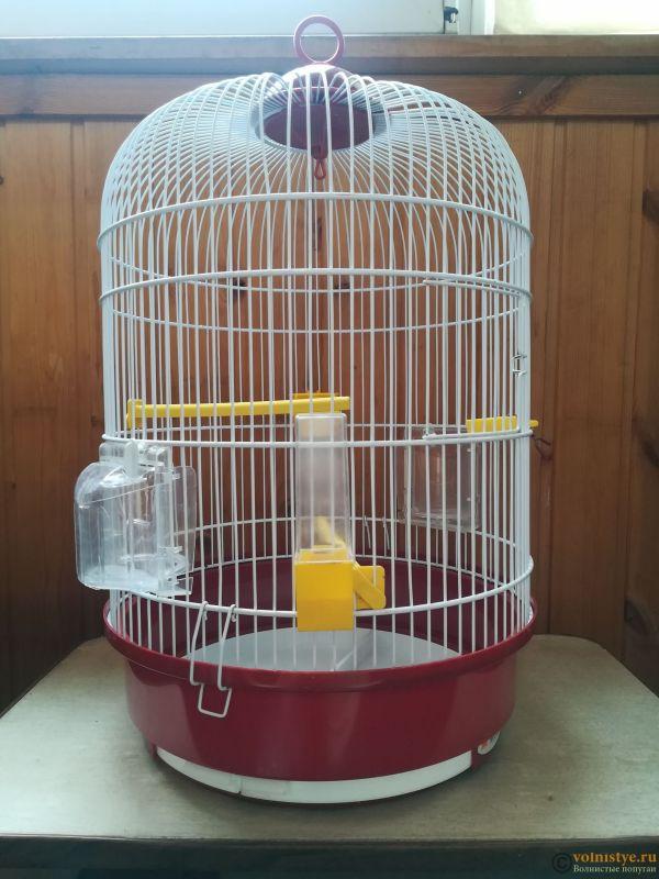 Продам двух волнистых попугаев парой - IMG_20190711_140235.jpg