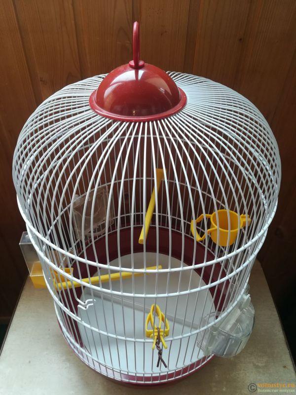 Продам двух волнистых попугаев парой - IMG_20190711_140350.jpg