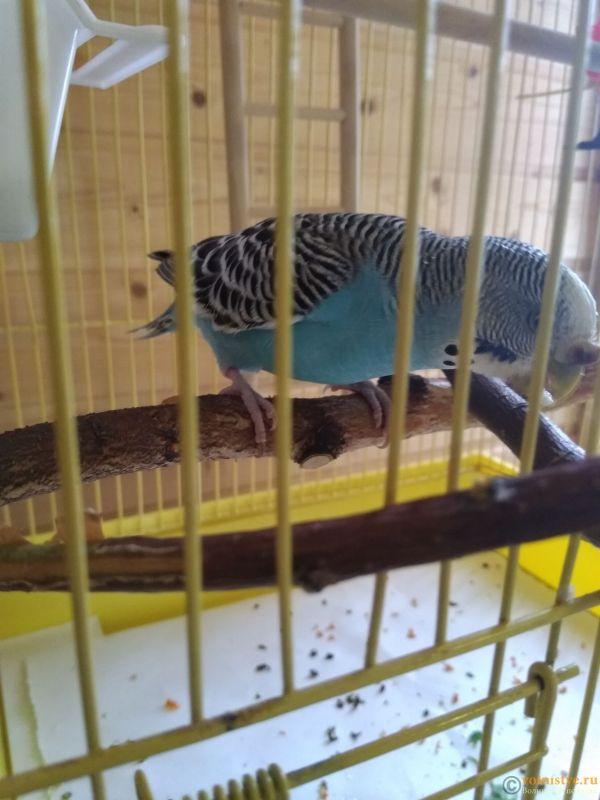 Гиперкератоз у попугая - IMG_20190712_160255.jpg