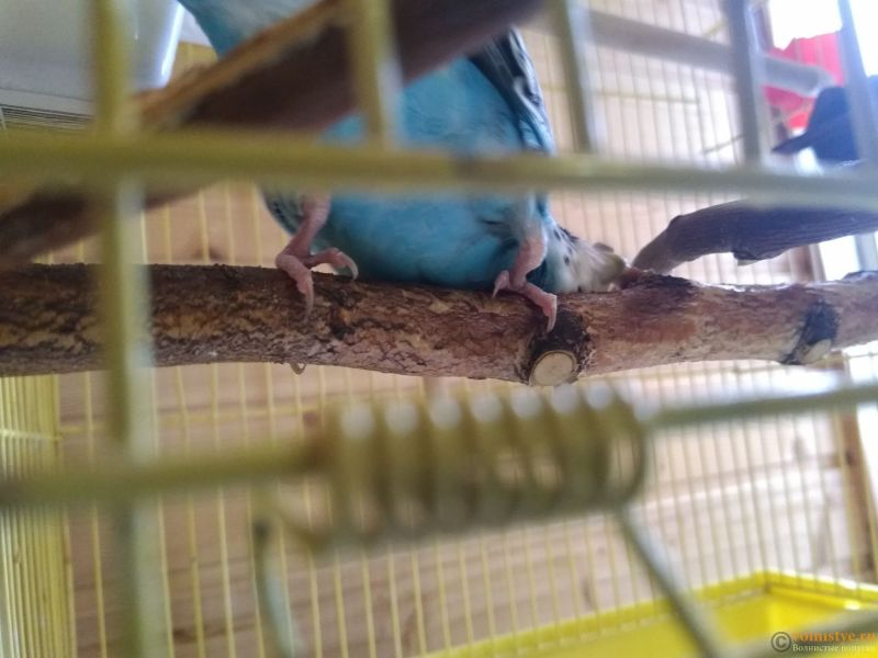 Гиперкератоз у попугая - IMG_20190712_160340.jpg