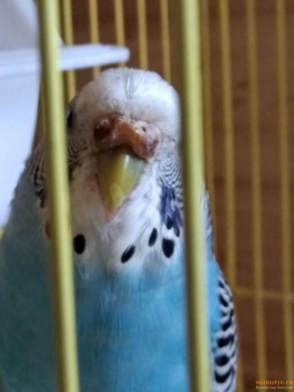 Гиперкератоз у попугая - IMG_20190715_095412.jpg