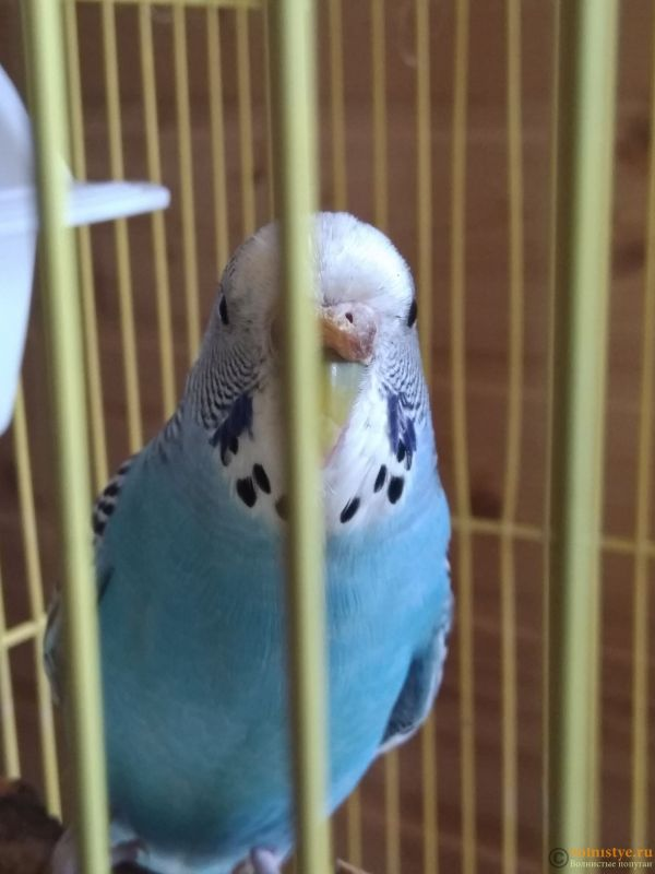 Гиперкератоз у попугая - IMG_20190715_095824.jpg