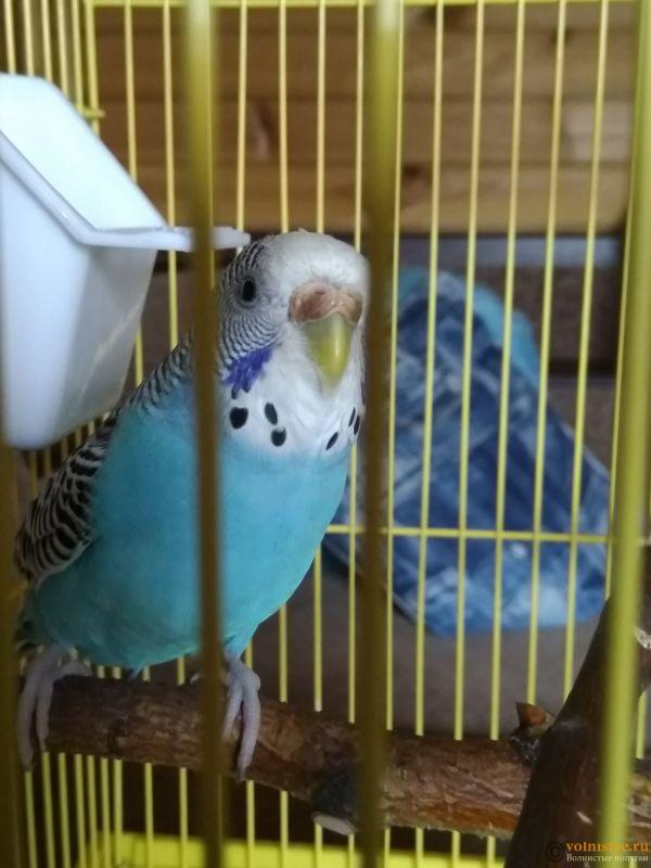 Гиперкератоз у попугая - IMG_20190728_081847.jpg