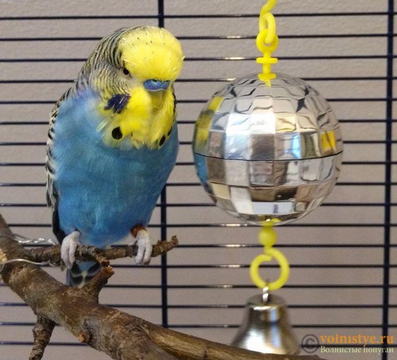 Попугай Куки и диско-шар - 2.jpg
