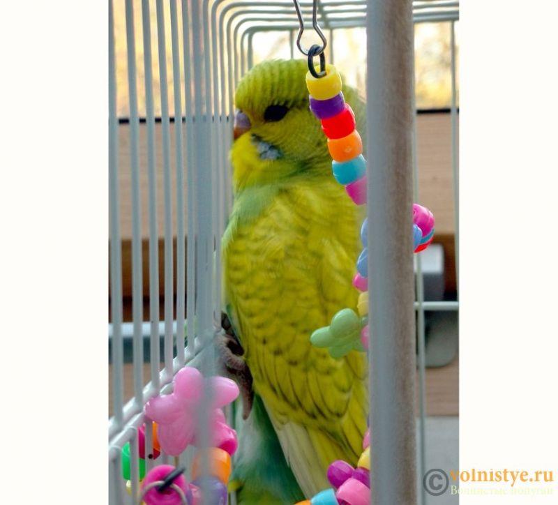 Попугай Шуша - 4а.jpg