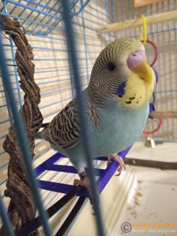 Мои птички - IMG-20190902-WA0002.jpg