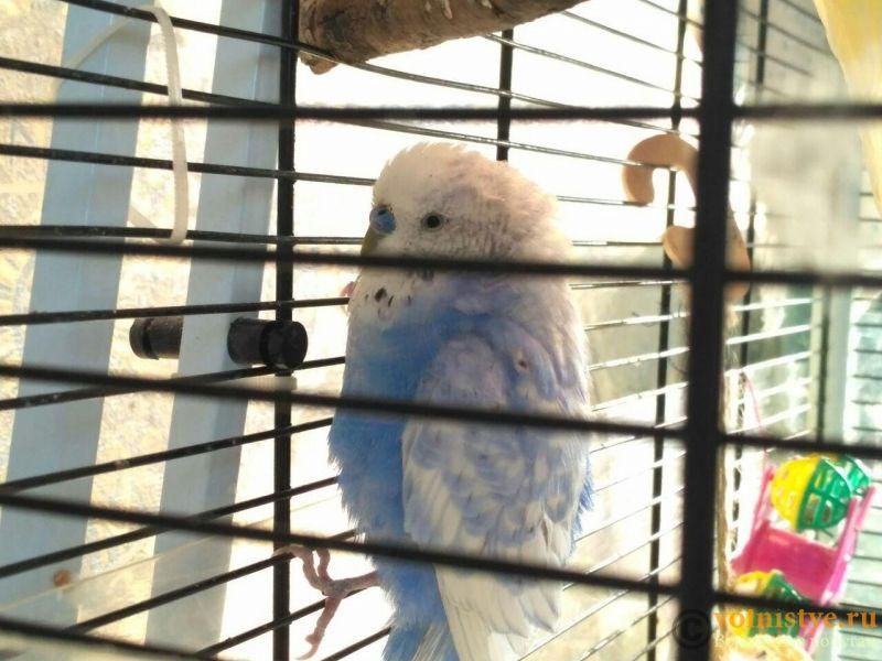 Нахохленный поппугай - photo_2019-09-10_12-15-46.jpg