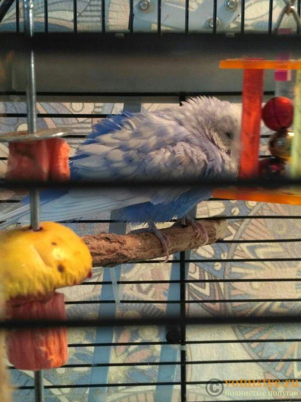 Нахохленный поппугай - photo_2019-09-10_12-15-56.jpg