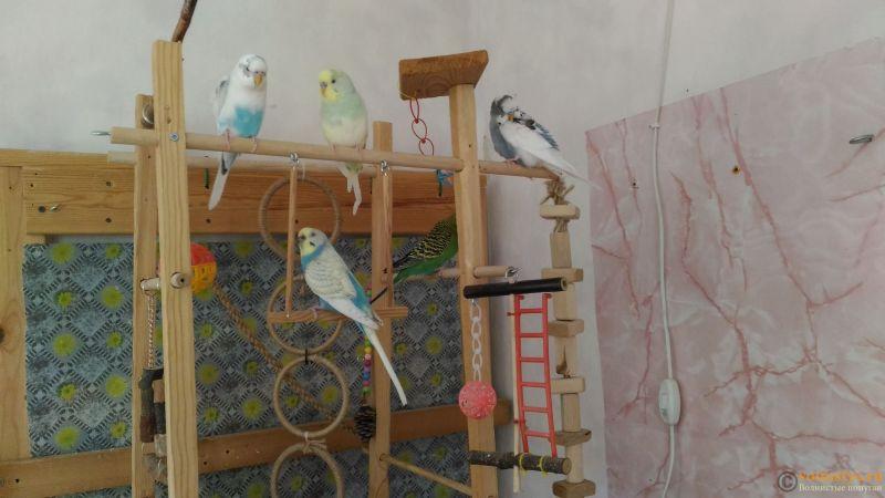 Птицы на игровой - P_20190915_130043.jpg