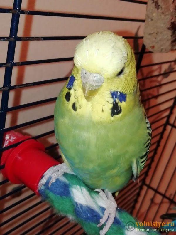 У попугая шелушится клюв и восковица - IMG_20191001_213648.jpg