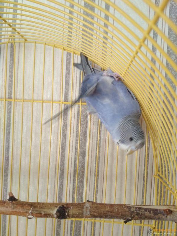 Попугай кувыркается в клетке и в кормушках - IMG_20191008_134518.jpg
