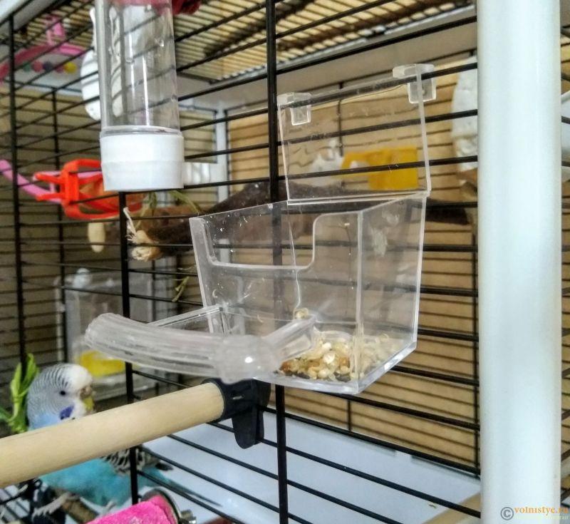 Попугай кувыркается в клетке и в кормушках - IMG_20191010_152917.jpg