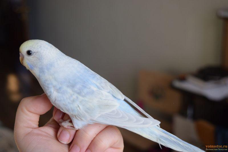 Радужная красота - птенцы от Тора и Мелисы - DSC_8551.JPG