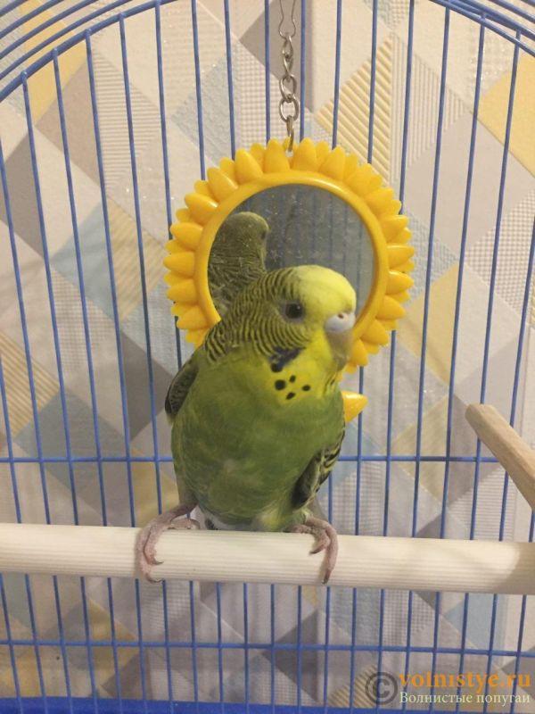 Помогите определить здоров ли попугай? - photo_2019-11-04_20-44-09.jpg