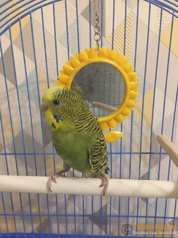 Помогите определить здоров ли попугай? - photo_2019-11-04_20-44-06.jpg