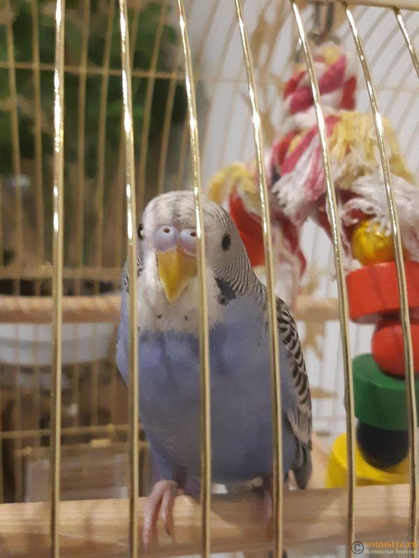 Помогите определить здоров ли попугай? - 20191105_202138.jpg