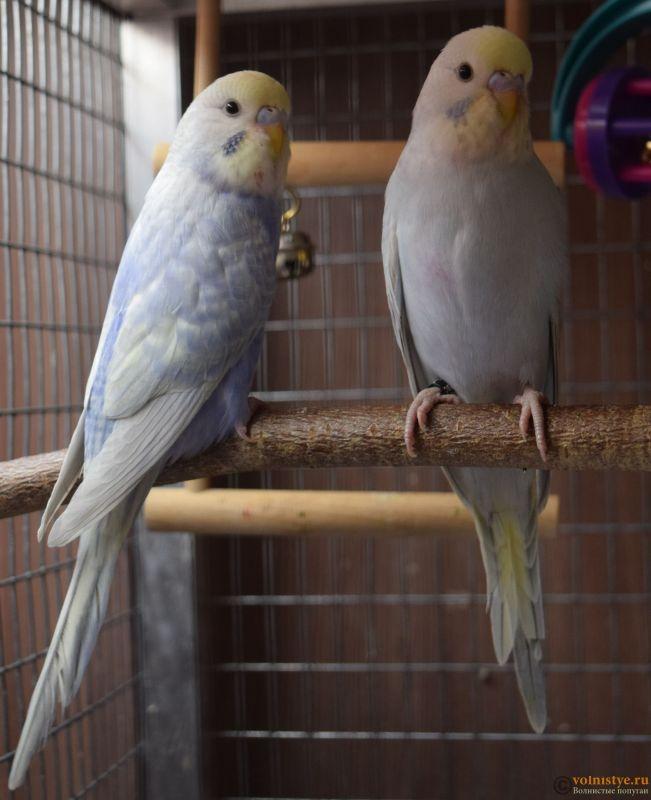 Радужная красота - птенцы от Тора и Мелисы - 3-4.jpg